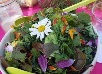 Salade sauvage et gourmande