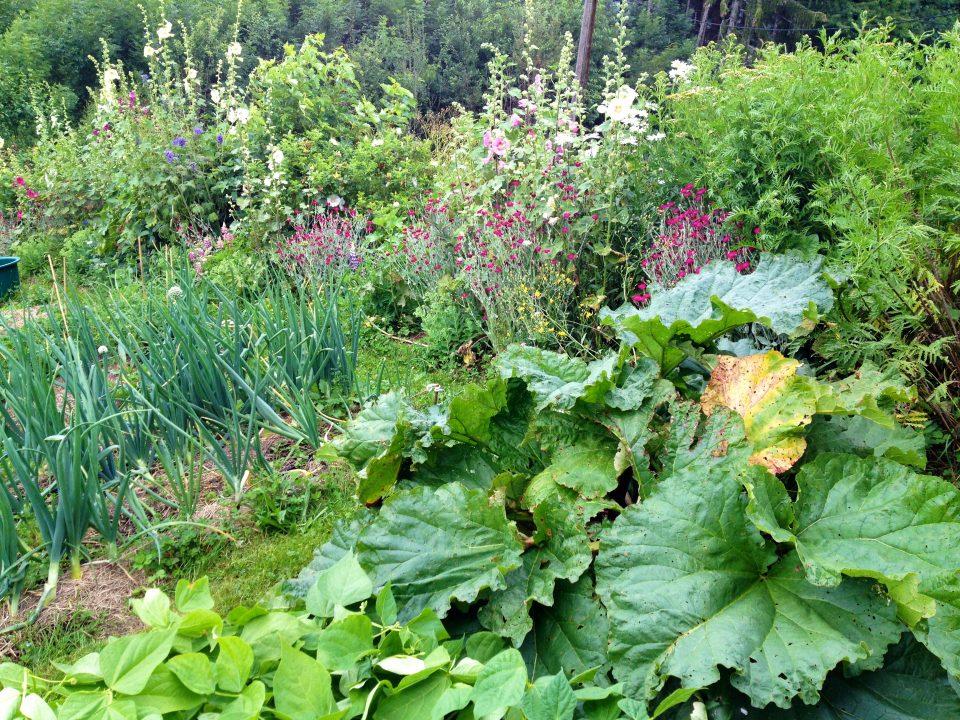 Journée d'initiation à la permaculture et aux pratiques agroécologiques.