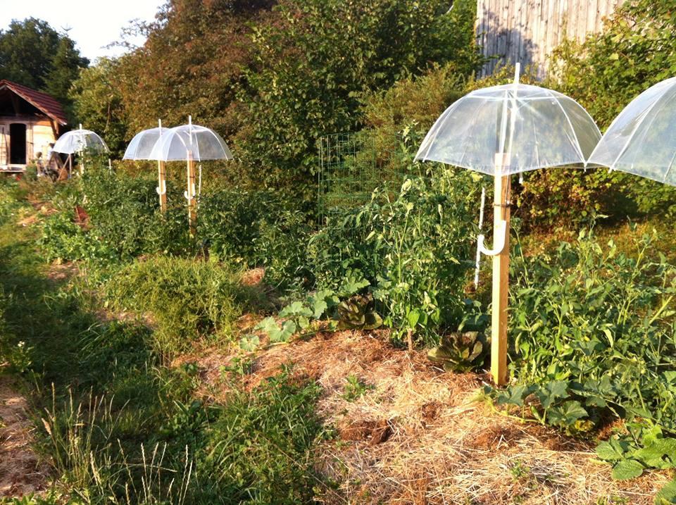 Parapluie à tomates