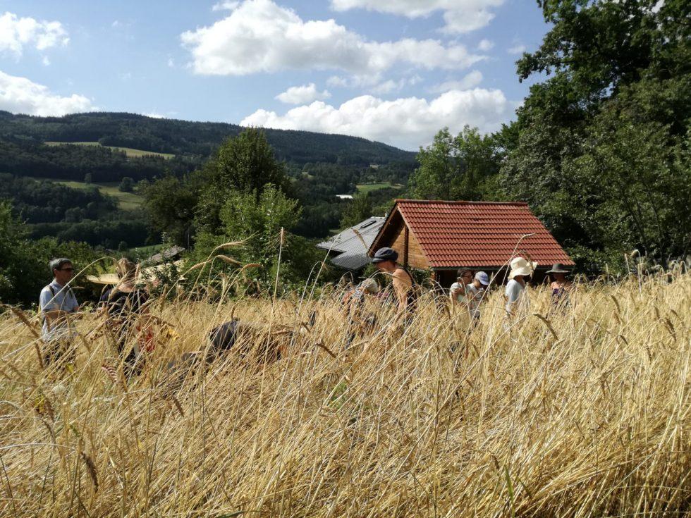 Stagiaires dans les blés